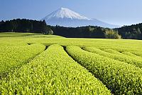 Cajovníky pod horou Fuji Caje.sk